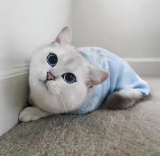Unduh 61+  Gambar Kucing Paling Imut Di Dunia Terlihat Keren HD