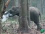 Penampakan Unik : Seekor Gajah Terlihat SedangMerokok