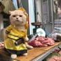 10 Potret Menggemaskan Kucing Bernama 'Dog' yang Sering Mangkal diPasar!